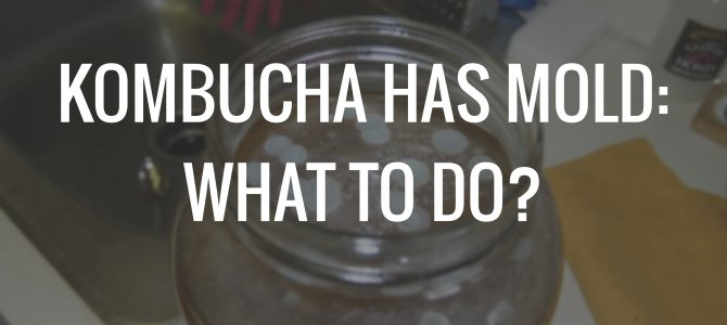 My Kombucha has Mold – What to do?